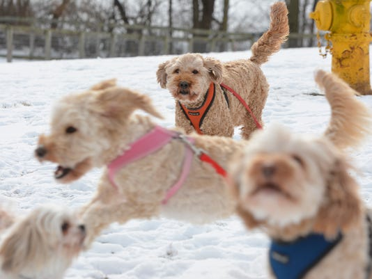 Playing in snow at Canine Meadows