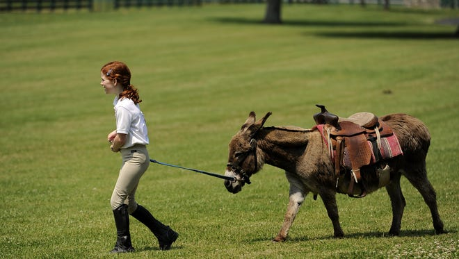 Cates Davis leads a burro across a field at Green Pastures Farm in Brentwood.
