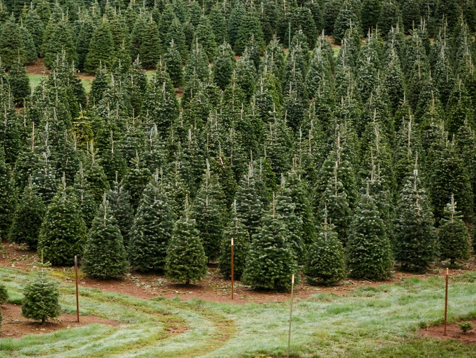 Christmas Tree Farms Salem Oregon