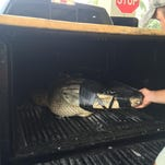A gator trapper took his catch of the day to a Naples car wash.