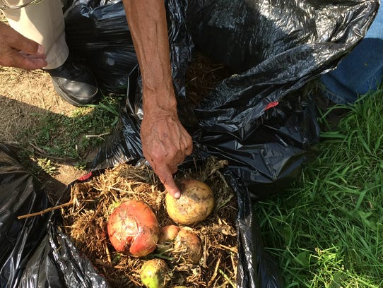 Dan Hoffman points to a tomato destroyed by late blight.