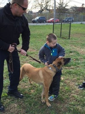 Logan Mast, 5, meets Wilmington bomb dog Greta Tuesday afternoon at the police department's K-9 Academy in Southbridge.