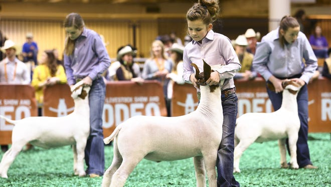 Cyndee Jo Hanslik shows off Champ in the ring at the Houston Livestock Show and Rodeo.