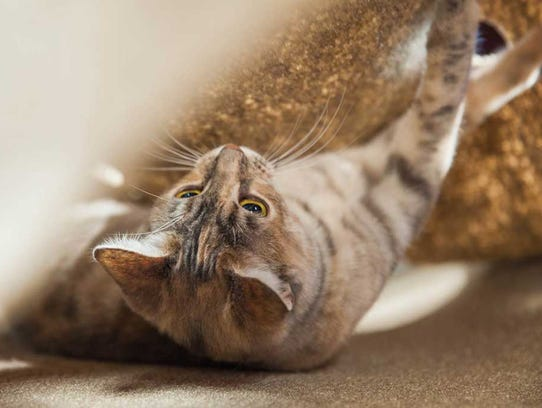 A cat plays in a Ripple Rug.