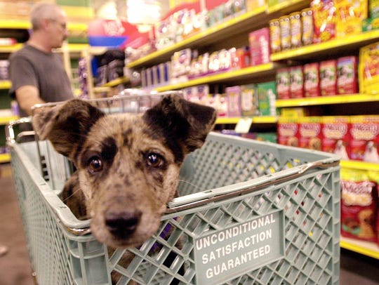 A dog rides in the shopping cart  at Petsmart. Unlike