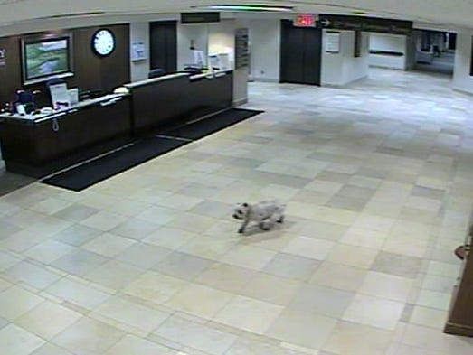 A closer image of Sissy captured on surveillance video.