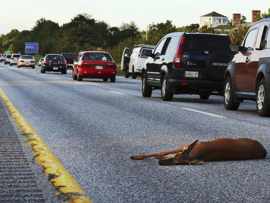 Oregon Roadkill