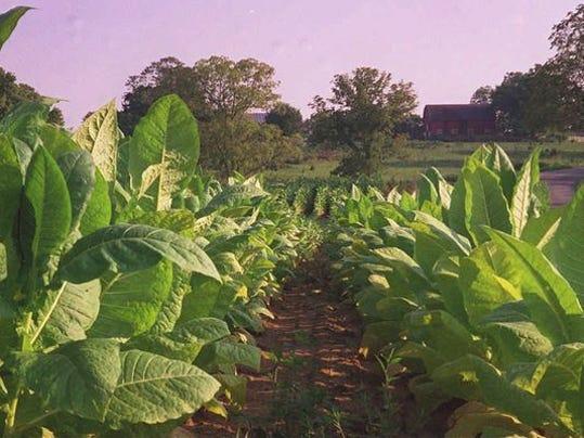 tobaccofarm.jpg