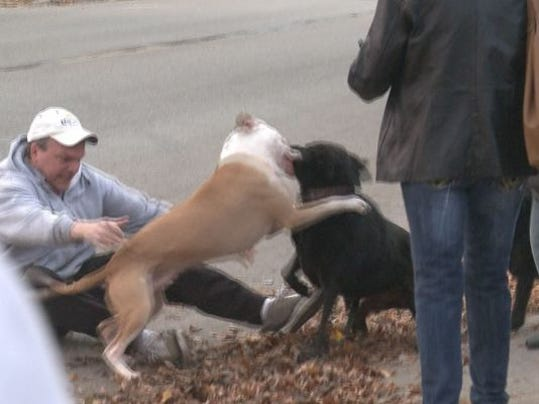 Aninimal Book: Police use taser when pit bull escapes leash, attacks dog