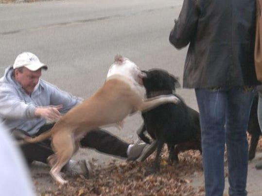 Pitbull Dogs Attack Videos