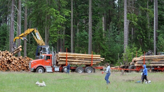 People walk dogs in a field at South Kitsap Regional Park, near where trees are being logged to combat root rot. Many park users have objected to the logging, but Kitsap County's chief forester said the trees must be removed for safety and forest health reasons.