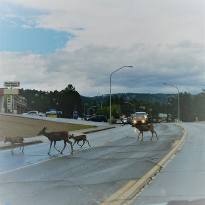 Deer take the right-of-way crossing Mechem Saturday