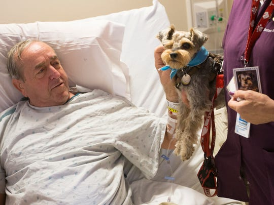 Dale Nielsen pets therapy dog Charlie. Charlie overcame abandonment, a rattlesnake bite, and a lost eye to continue giving good therapy to Mesa patients at Banner Baywood Medical Center in Mesa. Nielsen was in the hospital recovering from having a knee replacement surgery.