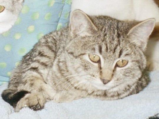 Flower is a wonderful, shy, loyal, sweet female cat.