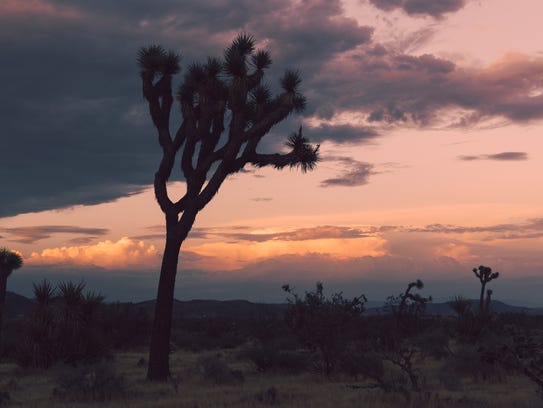 Admission to Joshua Tree and other national parks is free on Monday, Jan. 15, 2018, in honor of the Rev. Martin Luther King's birthday.