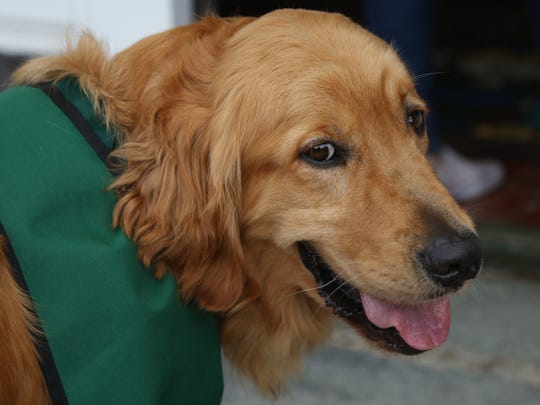 Violet Avenue Elementary School's service dog, Milano