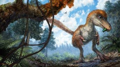 Nearly 100 million years after its death, a wee dinosaur's