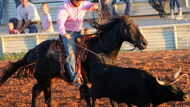 A cowboy ropes a steer by the horns Thursday night at the ranch rodeo.