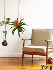 A new trend in the indoor plant world takes its cue