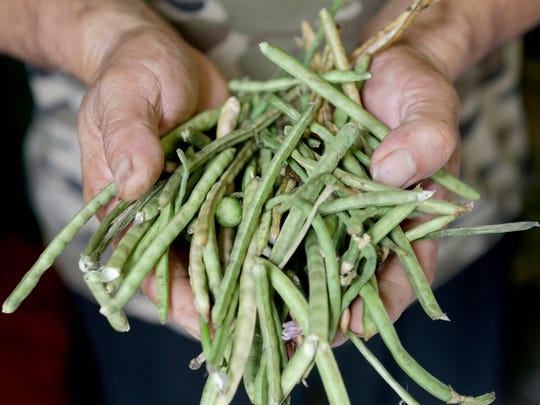 Unshelled lady peas can be found at farmers markets