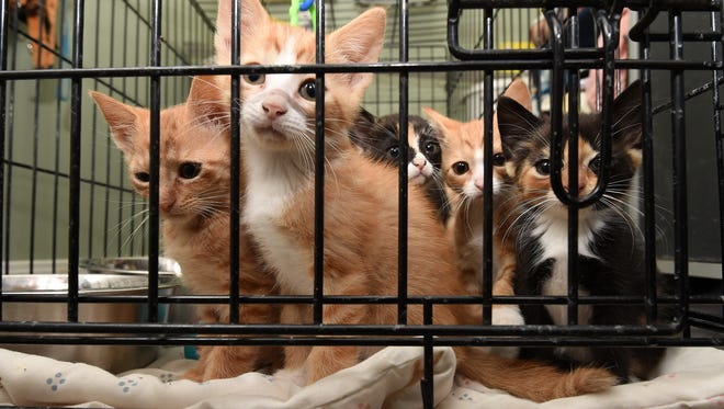 Kittens hang out in a cage at the Baxter County Animal Control facility in this file photograph. Funding for the shelter is running low.
