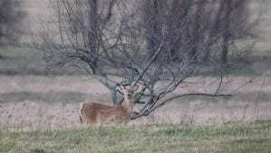 The antlerless deer license application period ends today