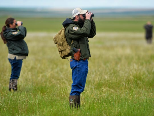 Montana Fish Wildlife and Parks game wardens, Kqyn Kuka, left, and Trenten Farmer scan the horizon for a young grizzly bear that visited Benton Lake National Wildlife Refuge on Thursday morning.