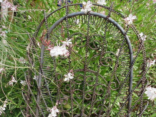 With small pink or white flowers, gaura may bloom nearly every month of the year.