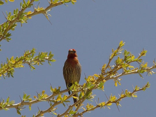 The desert is a winter sanctuary for a wide range of native and migratory birds.