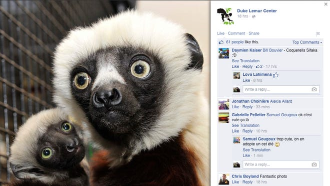 Jovian the lemur, seen here in a Facebook post from the Duke Lemur Center, has died. He was the star of the TV show Zoboomafoo.