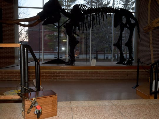 The fossilized skeleton of a mastodon is displayed inside the Joseph Moore Museum on Earlham College's campus.