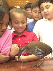 In this file photo, children get a close look at the ko'ko'.