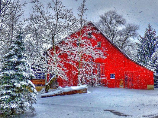 A pop of color in a white wonderland in Indiana.