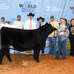 Grand Champion Heifer was a Simmental exhibited by Sarah Lillesand of Sheboygan Falls, WI.