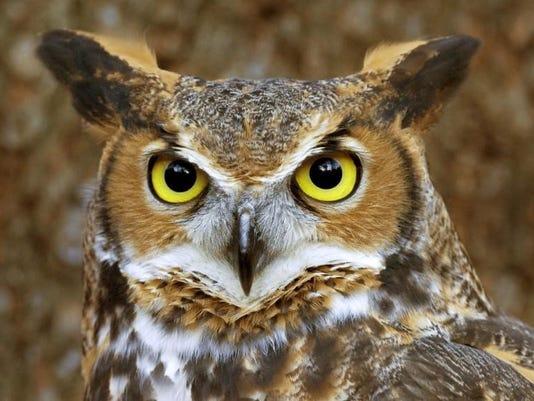 636186985942164474-frm-owl-prowl.jpg