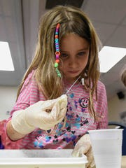 Scarlett Davis, 7, of Lewes dissects her squid.