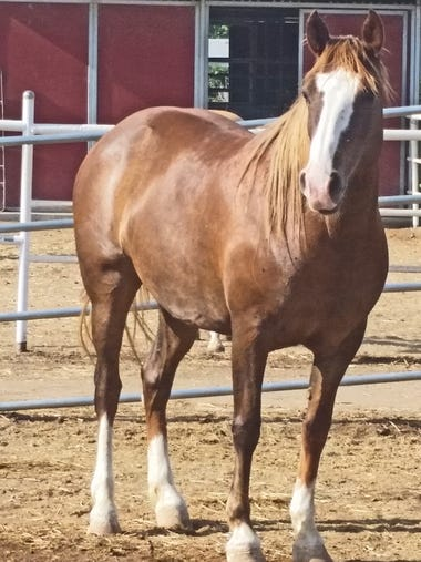 Ruth is a beautiful 6-year-old mare. Once a wild horse,