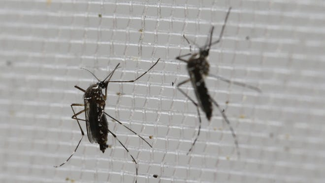 AP The Zika virus is spread primarily through bites from the aedes aegypti mosquito. Concern over the virus is rising.