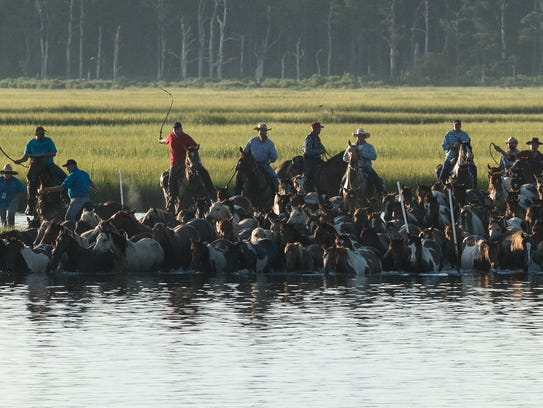 Saltwater Cowboys lead a herd of ponies into the water