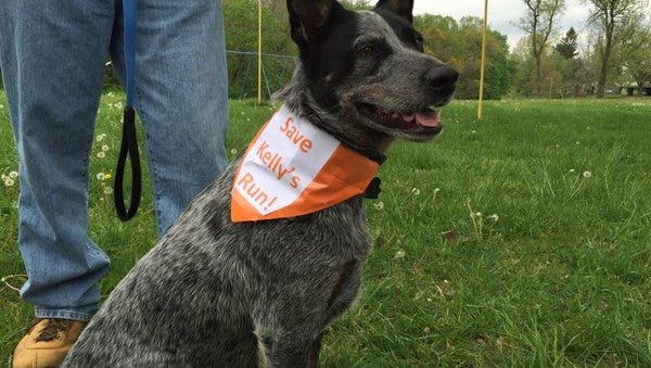 "Cooper, a blue heeler, wears a collar that says ""Save Kelly's Run"" on Saturday at the entrance to the popular hiking route where a peaceful protest was held."
