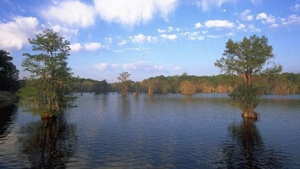 Chicot Lake, located about 7 miles from Ville Platte in Evangeline Parish, will be drawn down beginning Sept. 6 to allow for vegetation control and bridge repairs.