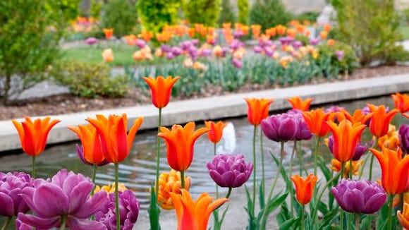 Spring at Untermyer Gardens in Yonkers.