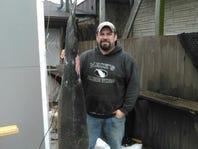 20 sturgeon harvested Tuesday on Lake Winnebago