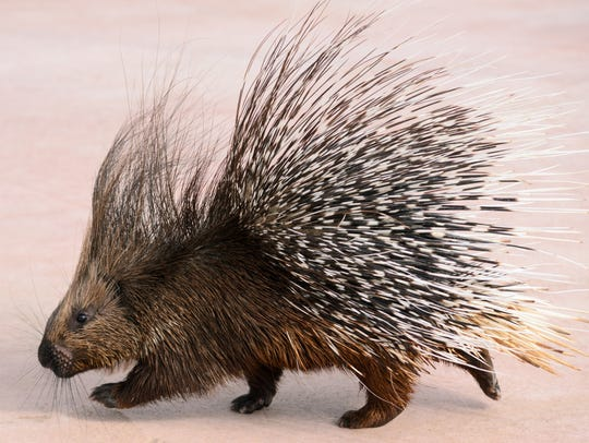 A woman found herself in a prickly situation after
