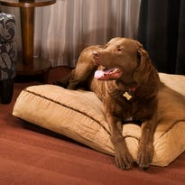 Pet-friendly hotels in Madison, Wisconsin Dells and beyond are growing in popularity