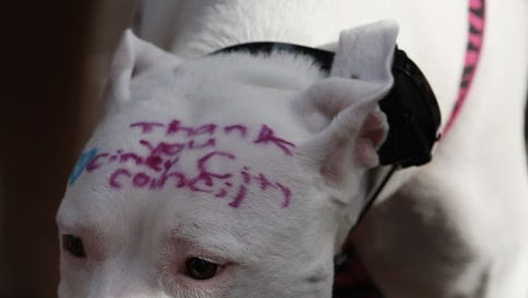 Molly, a Pit from Avondale shows her thanks to Cincinnati City Council as the Cincinnati Pit Crew, which lobbied Cincinnati City Council to repeal the city's pit bull ban, celebrate their victory with a group walk