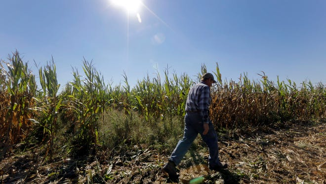 Genetically engineered crops are in nearly 12% of fields worldwide, according to a new report.