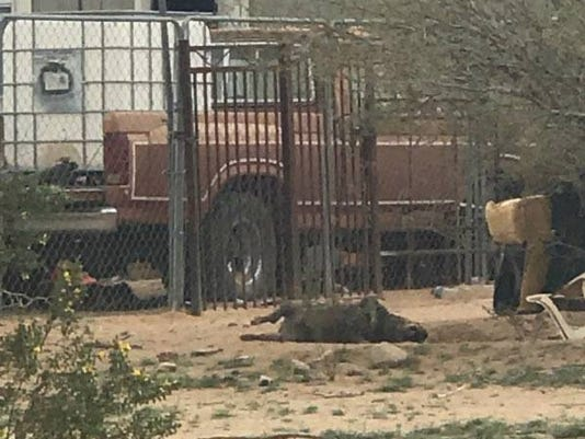 Pinal County animal abuse