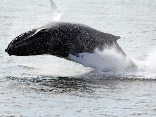 Whale 2.jpg