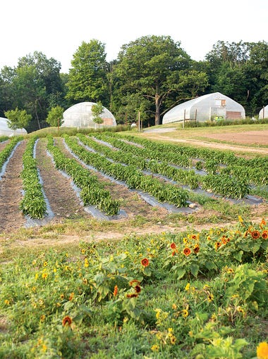 Wegmans is using hoop houses to extend the growing season as long as nine months of the year.